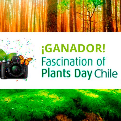 GANADOR Concurso Fascination of Plant Day Chile
