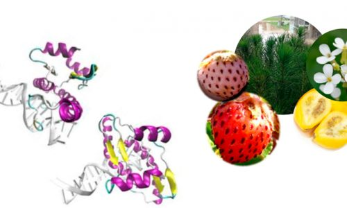 "Workshop: ""Applied Plant Biology II: Expression of gene regulation in plant development and fruit ripening"""