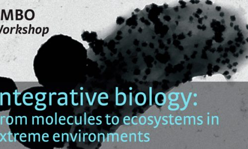 EMBO Workshop: Integrative biology: From molecules to ecosystems in extreme environments (w19-107)
