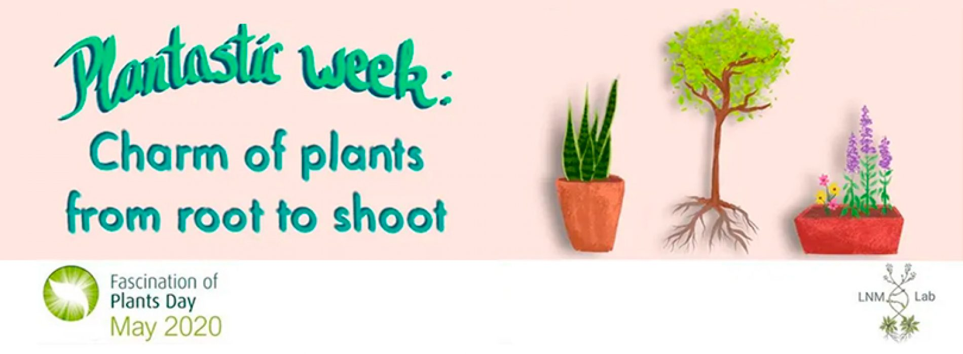 """Fantastic week: the charm of plants from root to shoot"" for FoPD 2020 in Chile"
